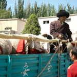 Uigher sheep seller