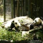 Highlight for Album: Zoo - June 1, 2006